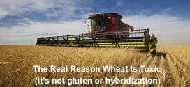 The Real Reason to Avoid Wheat!