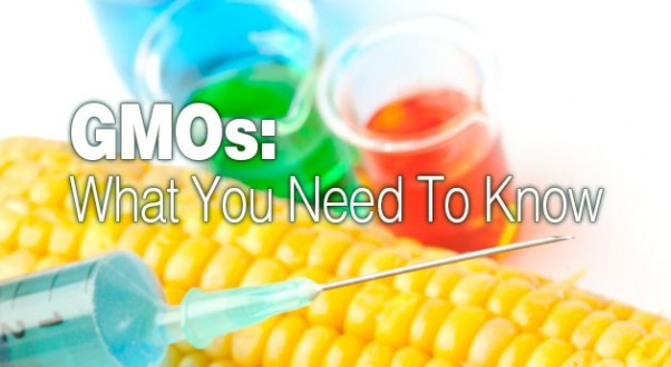 GMOs: What You Need To Know