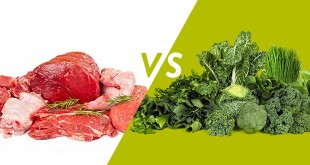 Plant vs. Animal Proteins How a Vegetarian Diet Crushes Dietary Needs While Fighting Disease
