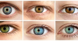 Vitamins that contribute to eye health