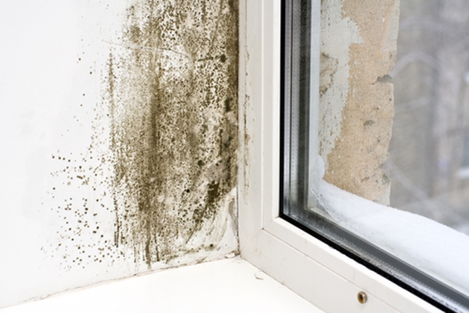 If you want to achieve optimal health, then you need to consider potential mold exposure that is coming from your environment and food.