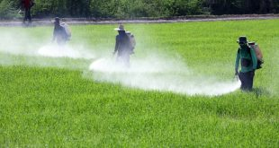 Pesticides are linked to various cancers and other chronic conditions.