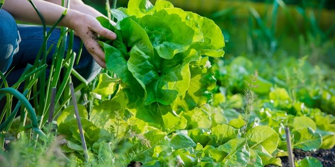 Leafy greens may take the trophy when it comes to optimizing your health.