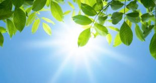 Learn about the difference between vitamin D2 and D3.
