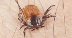 Let's take a closer look at some of the interesting and important facts you need to know about Lyme disease.