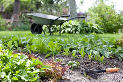 Gardening takes more effort than planting and watering a seed. If you really want to maximize your harvest this spring, consider the following tips.