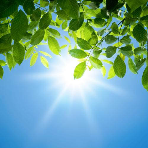 Discover the difference between vitamin D2 and vitamin D3.