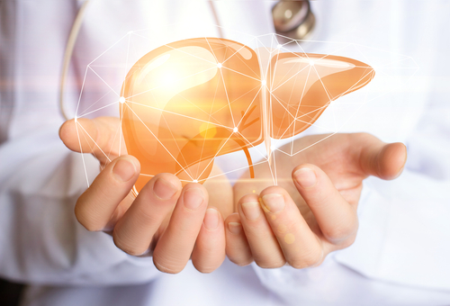 healthy liver support concept