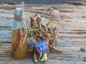Tincture of chicory roots