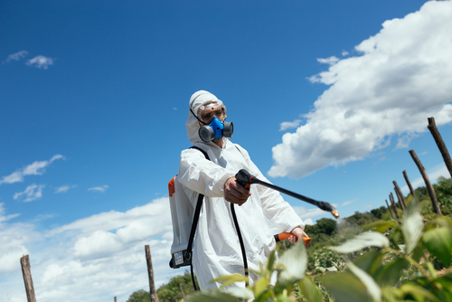 man spraying toxic pesticides on crop
