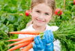child with carrots in Vegetable garden