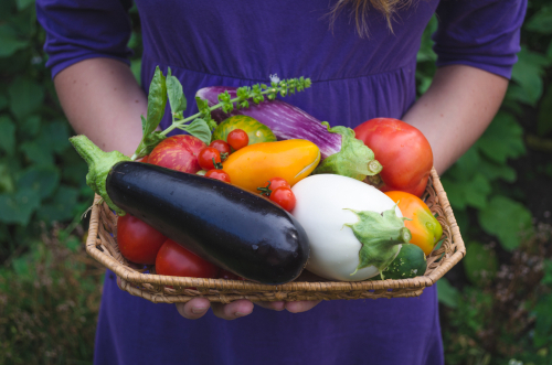 holding freshly picked organic eco grown vegetables