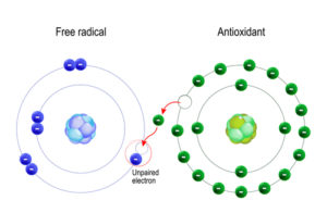 free radical and antioxidant atom illustrations