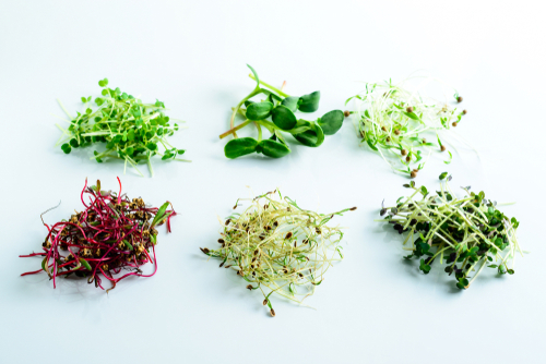 various-microgreen-sprouts