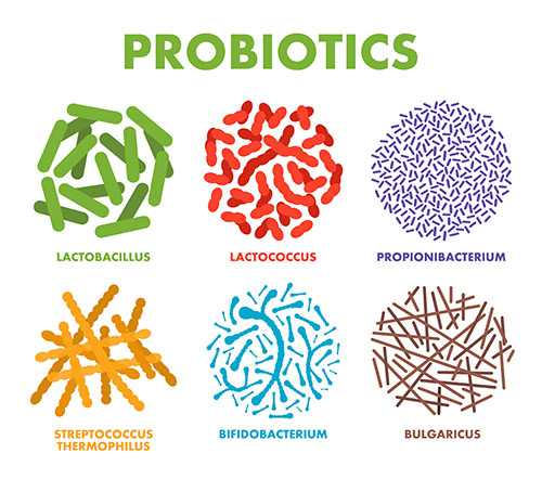 microscopic probiotics illustration